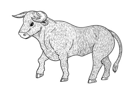 Bull coloring, black outline, isolated on white background