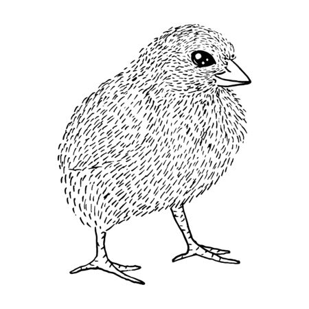 Little cute fluffy chicken sketch with black lines isolated on white background Stock Illustratie