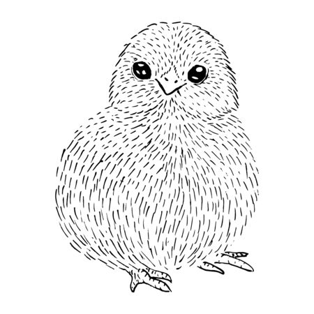 Little cute chicken sits sketch with black lines, isolated on white background Stock Illustratie