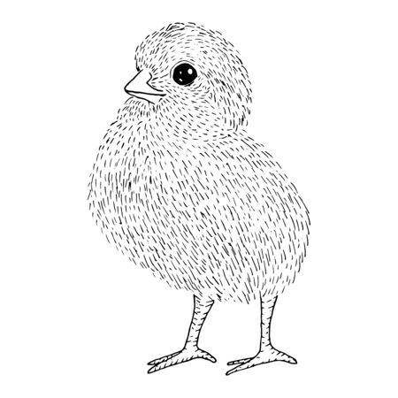 Little cute chicken side sketch with black lines, isolated on white background