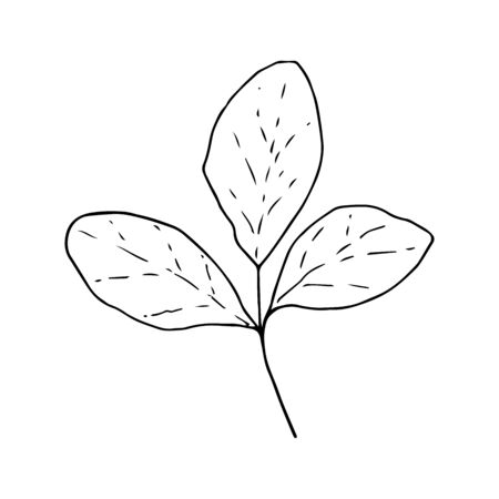 Leaves three pieces line isolated on a white background, vector for design and decor, logo, print, floristry, botany, spring, summer, autumn.