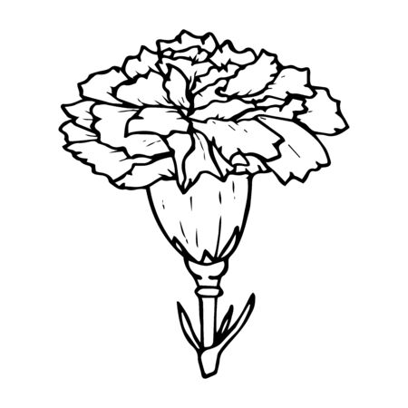 Carnation flower contour drawing in black isolated on white background, stock vector illustration for design and decoration, sticker, template, logo, print, floristry 일러스트