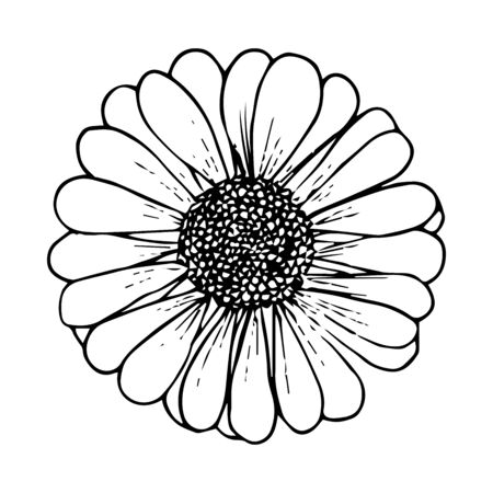 Daisy flower black outline drawing isolated on white background, stock vector illustration for design and decoration, sticker, template, logo, print, healing herbs