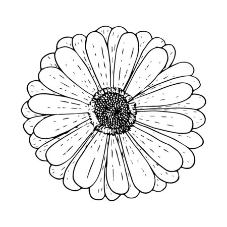 Gerbera flower top view, black outline isolated on white background, stock vector illustration for design and decoration, print, logo, tattoo, cutout template, sticker Illustration