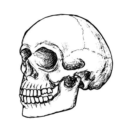 Sketch human skull side view, black outline on white background, stock vector illustration, for design and decoration, gothic, halloween, poster