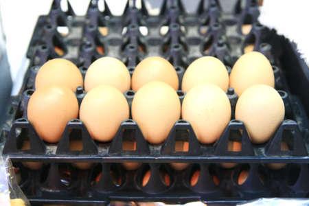 trigger fish: Chicken eggs in basket.