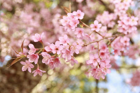 Pink flower with tree photo