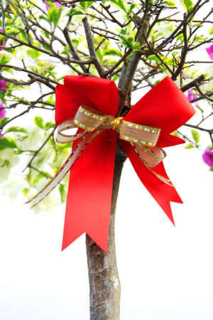 Red bow and stick background photo