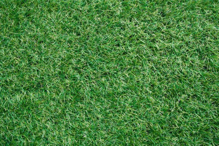 Artificial grass background photo