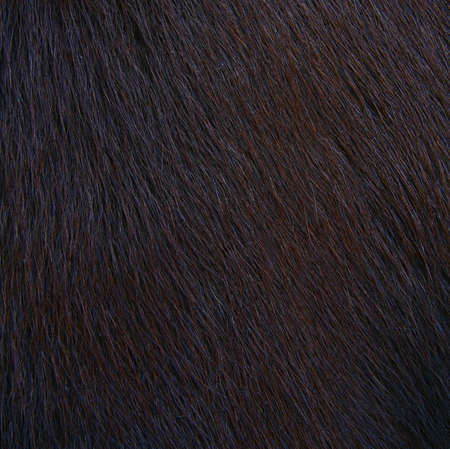 cuero vaca: caballo textura peluda, piel Foto de archivo