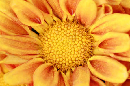 pollen of yellow flower  photo
