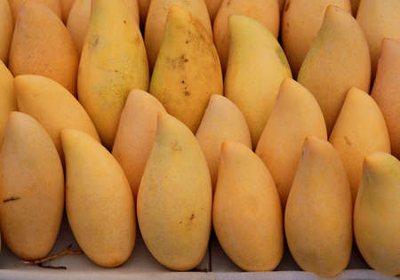 ripe mango, Thailand market  photo