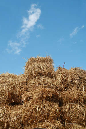 straw stack and blue sky  photo