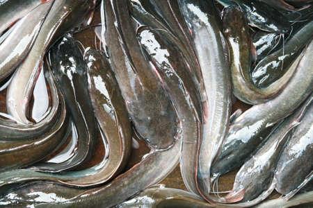 cartilaginous: catfish in market, Thailand