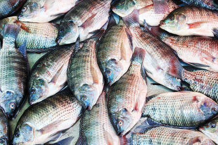 fish background, Tilapia  photo