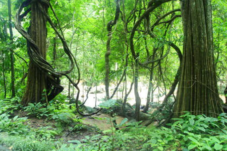 deep forest in Chiang Mai ,Thailand  photo