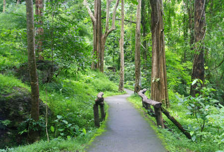 Roadway entrance to forest, Chiangmai, Thailand  photo