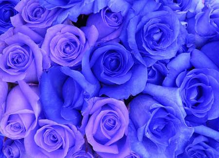 blue roses background  photo