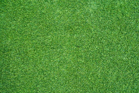 grassy field: detail of green grass