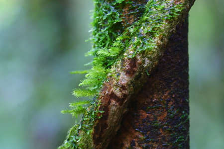 close up moss on tree, Chiang Mai, Thailand  photo