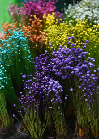 colorful small grass flower in garden photo