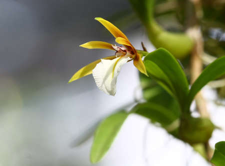 close up small orchid in wild photo