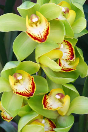 pedicel: close up vivid orchid in garden, colorful flower