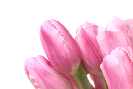 close up colorful tulips in garden photo