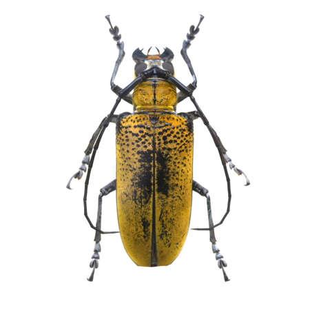 amazing beetle isolated on white background