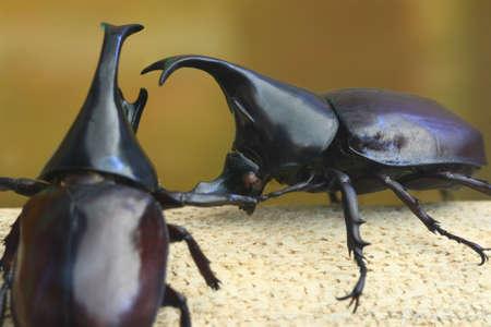 amazing beetle isolated on white background photo