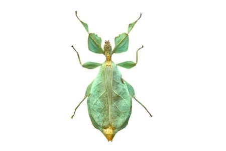 big amazing grasshopper isolated on white background photo