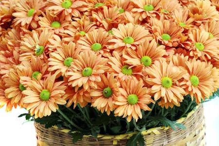 lindi: close up orange flower in bamboo basket