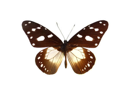 femal: colorful butterfly isolated on white background