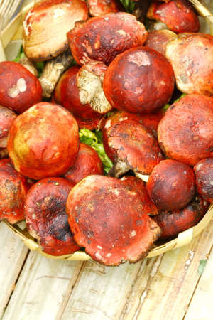 toxins: close up red wild mushroom on table Stock Photo