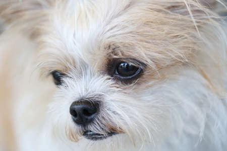 dog nose: closeup of dog nose