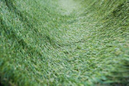 curve: curve green grass field background