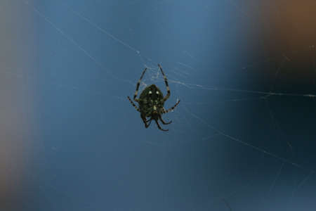 arachnophobia animal bite: macro closeup small Spider