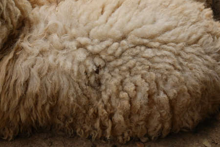 voile: brown sheep, wool