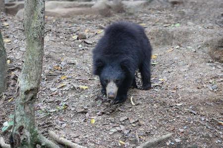 sloth: oso perezoso en el bosque