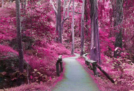 morado: Camino al bosque púrpura, la imaginación de fondo Foto de archivo