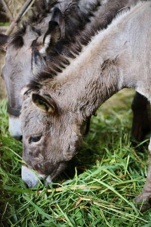 encounters: donkey forse in farm Stock Photo
