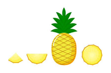 pineapple with round slices and piece. Summer fruits isolated on white background of vector illustrations. Fresh cartoon. Illustration