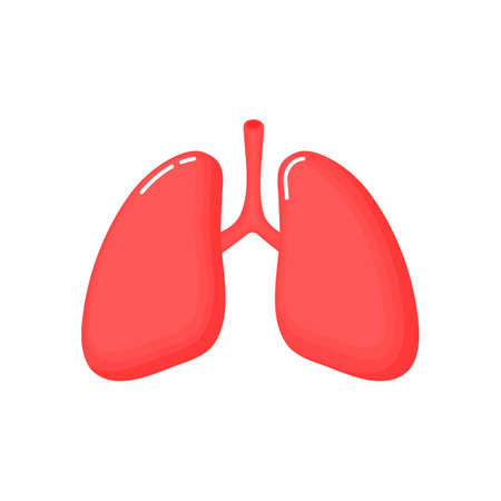 Human Lungs anatomy icon. flat cartoon style. bright and cute. Isolated on white background. vector illustration.