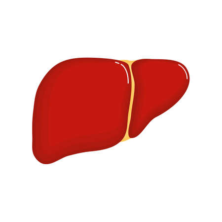 Human liver anatomy icon. flat cartoon style. bright and cute. Isolated on white background. vector illustration.