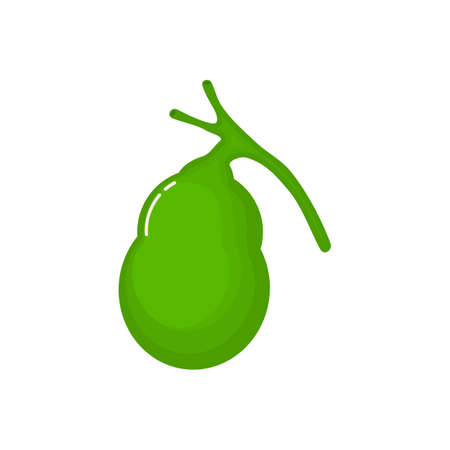 Human gallbladder anatomy icon. flat cartoon style. bright and cute. Isolated on white background. vector illustration.