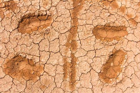 Dry cracked soil pattern photo