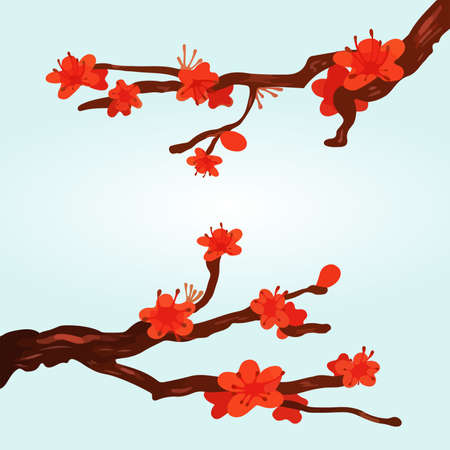 Cherry Blossoming Background Sakura Flowers red on branch.