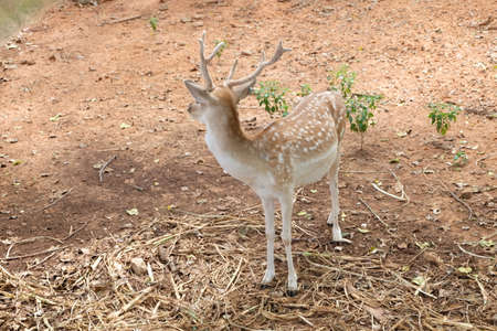herbivores: Deer are herbivores stars with white spots on its body.