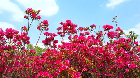 Red flowers 写真素材