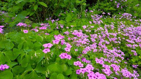 Flowers 写真素材